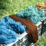 yarns and fleece dyed with black walnut and woad