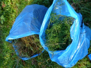 bags of bedstraw