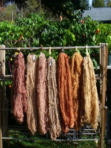 yarns dyed with Lady's Bedstraw roots