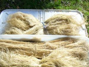 broken flax