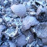 black walnut hulls with frost