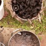 black walnut hulls and first dye bath