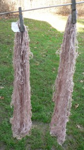 umbilicate lichen no tannin on cotton