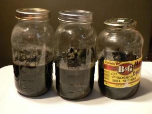 new lichen jars