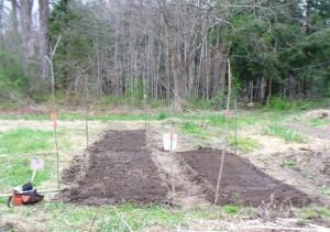 Amethyst Brook planted April 15th