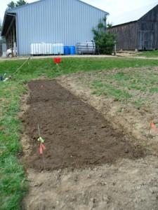 Amethyst Farm planted April 15th