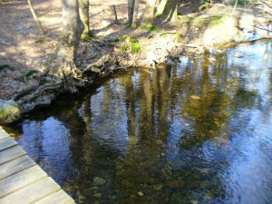 Amethyst Brook