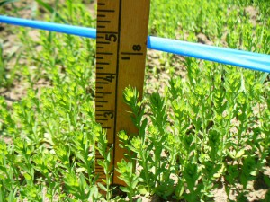 Evelin at Small Ones Farm May 18