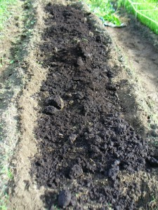 woad bed with compost and manure