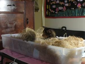 Pippi prepares to attack