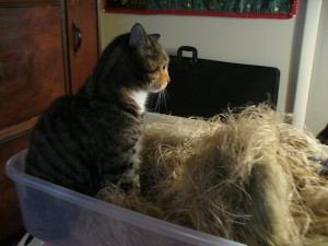 Pippi in a basket