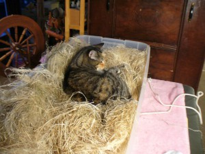 Pippi settles in