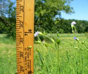 Evelin Small One farm 32 inches