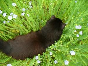 Squeak in flax