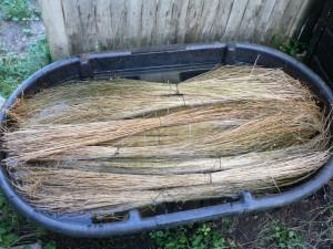 2011Amethyst Brook flax July 27 2012