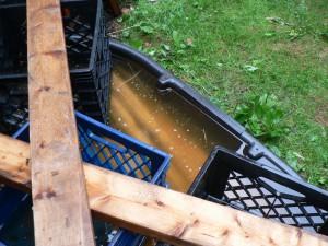 2011 Amethyst Brook flax July 28, 2012