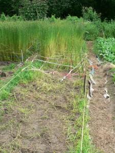 Amethyst Brook vns after harvest