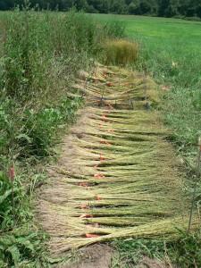 Amethyst Farm crop bundled