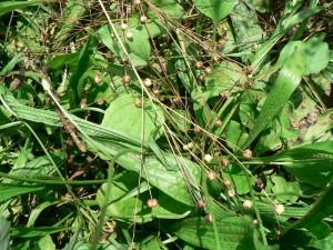 Amethyst Farm felled seedpods