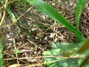 Amethyst Farm seed debris