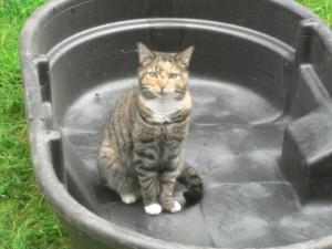 Pippi in tank