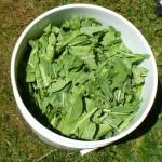 bucket of leaves