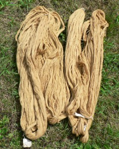 yarn dyed with yarrow plants