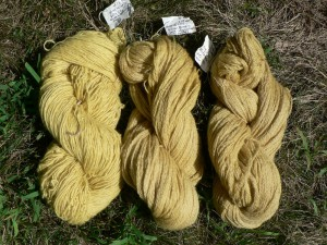 Queen Anne's Lace yarns