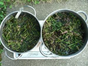 yarrow dye pots
