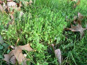 November 10 flax in sun