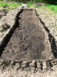 planted flax bed