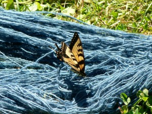 swallowtail on woad-dyed yarn