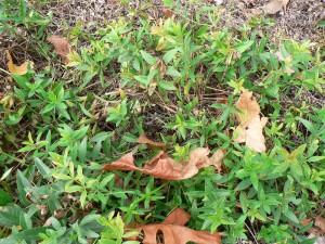 green fall madder tops