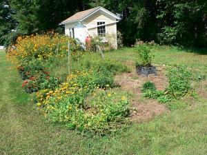 garden with swamp milkweed