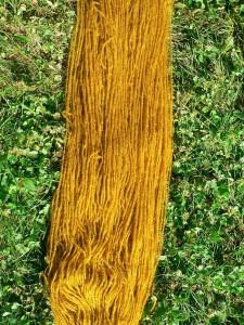 marigold not green