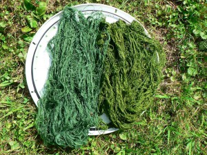 two greens with woad and weld