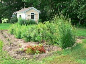Bramble Hill garden July 5