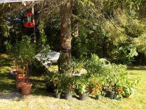 September bird feeders