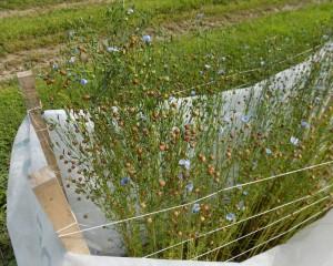 Aug 14 Viking plants