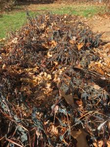 November 15 Japanese indigo and fall leaves