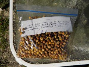bag of seed bolls
