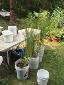 flax in buckets