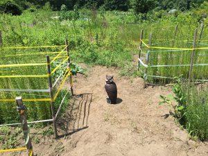 owl July 13