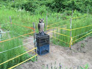 owl July 14